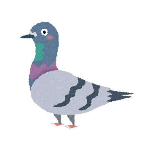 ポッポ鳩プロフ画像
