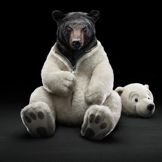 紅の熊画像